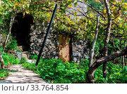 Купить «The old cabin stay in grapes field.», фото № 33764854, снято 15 июля 2020 г. (c) age Fotostock / Фотобанк Лори