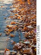 Купить «Fallen leaves on an alley in a park close-up.», фото № 33775686, снято 19 ноября 2019 г. (c) Елена Блохина / Фотобанк Лори