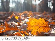 Купить «Fallen yellow leaves close-up.», фото № 33775694, снято 19 ноября 2019 г. (c) Елена Блохина / Фотобанк Лори