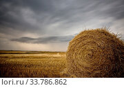 Купить «Prairie Scene Saskatchewan summer crop harvest Canada», фото № 33786862, снято 1 июня 2020 г. (c) age Fotostock / Фотобанк Лори
