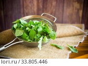 arugula in a colander on a wooden table. Стоковое фото, фотограф Peredniankina / Фотобанк Лори