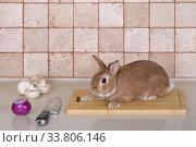 Купить «Живой кролик сидит на разделочной доске», фото № 33806146, снято 19 мая 2020 г. (c) Игорь Долгов / Фотобанк Лори
