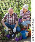 Купить «Elderly couple gardening in the backyard», фото № 33814550, снято 27 мая 2020 г. (c) Яков Филимонов / Фотобанк Лори