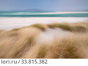 RF - Sand dunes with Marram grass (Ammophila arenaria) and beach at Seilebost beach, Isle of Harris, Scotland, UK. October (This image may be licensed either as rights managed or royalty free.) Стоковое фото, фотограф Ross Hoddinott / Nature Picture Library / Фотобанк Лори