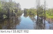 Купить «View of small dirty river between the trees», видеоролик № 33827102, снято 1 июня 2020 г. (c) Константин Шишкин / Фотобанк Лори