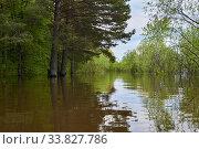 Купить «Forest glade flooded during the flood», фото № 33827786, снято 15 мая 2020 г. (c) Евгений Харитонов / Фотобанк Лори