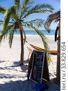 Купить «Magnificent view of a beach with a palm tree and a surf shop », фото № 33829654, снято 25 февраля 2020 г. (c) Wavebreak Media / Фотобанк Лори