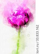 Купить «Flower magenta peony in the country in the spring. Stylization in watercolor drawing.», фото № 33833162, снято 5 июня 2020 г. (c) easy Fotostock / Фотобанк Лори