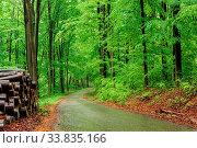 Купить «Green forest with pathway in sprintime in Hungary», фото № 33835166, снято 14 июля 2020 г. (c) easy Fotostock / Фотобанк Лори