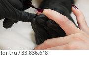 Купить «Nail technician doing manicure for client in beauty salon», видеоролик № 33836618, снято 23 мая 2020 г. (c) Алексей Кузнецов / Фотобанк Лори