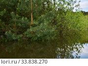 Купить «Forest flooded when the river overflowed», фото № 33838270, снято 15 мая 2020 г. (c) Евгений Харитонов / Фотобанк Лори