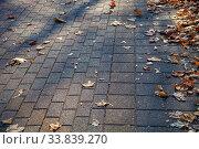 Купить «Fallen leaves on an alley in a park close-up.», фото № 33839270, снято 19 ноября 2019 г. (c) Елена Блохина / Фотобанк Лори