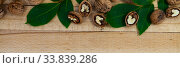 Купить «Walnuts and leaves», фото № 33839286, снято 11 мая 2020 г. (c) Елена Блохина / Фотобанк Лори