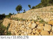 Bancales para viña, La Bernadeta, Esporles, Mallorca, Balearic Islands, Spain. Стоковое фото, фотограф Tolo Balaguer / easy Fotostock / Фотобанк Лори