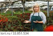 Mature woman standing near begonia plants while gardening in greenhouse. Стоковое фото, фотограф Яков Филимонов / Фотобанк Лори