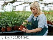 Woman horticulturist working with seedlings of strawberries while gardening. Стоковое фото, фотограф Яков Филимонов / Фотобанк Лори