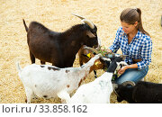 Female farm owner taking care of goats at sunny day. Стоковое фото, фотограф Яков Филимонов / Фотобанк Лори