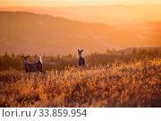 Купить «Cypress Hills Sunset Elkwater Alberta Horeshoe Canyon», фото № 33859954, снято 1 июня 2020 г. (c) age Fotostock / Фотобанк Лори
