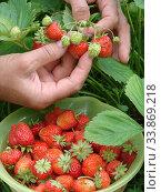 Купить «Strawberry», фото № 33869218, снято 4 июля 2010 г. (c) Александр Карпенко / Фотобанк Лори