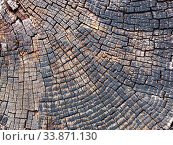 Купить «Old cracked timber surface with tree rings and lines in a geometric concentric pattern», фото № 33871130, снято 14 июля 2020 г. (c) easy Fotostock / Фотобанк Лори