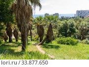 Купить «Fragment of arboretum with a palm in Sochi, Russia», фото № 33877650, снято 5 июня 2018 г. (c) Володина Ольга / Фотобанк Лори