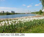 Купить «Цветник с тюльпанами в парке Гольяновского пруда весной. Город Москва», эксклюзивное фото № 33886286, снято 25 мая 2020 г. (c) lana1501 / Фотобанк Лори