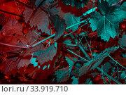 Купить «Инфракрасные листья. Идея природного цветового дизайна», фото № 33919710, снято 4 июня 2020 г. (c) Сергей Тиняков / Фотобанк Лори