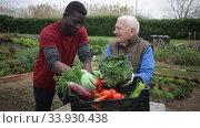 Smiling senior man friendly talking to his African American neighbor at vegetable garden. Стоковое видео, видеограф Яков Филимонов / Фотобанк Лори