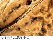 Bayern, Oberbayern, Landwirtschaft, Obst, Obstbaum, Bäume, Baeume, Nuss, Nuß, Wallnuss, Wallnuß, Wallnüsse, Wallnuesse, Nussschale. Стоковое фото, фотограф ROHA-Fotothek Fürmann / age Fotostock / Фотобанк Лори