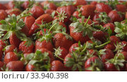 Купить «A close-up of a red ripe juicy strawberry slow falls one by one on a tray with berries made of steel. Berries background. Tracking slow motion video. Soft focus. Full HD video, 240fps,1080p», видеоролик № 33940398, снято 5 августа 2020 г. (c) Ярослав Данильченко / Фотобанк Лори