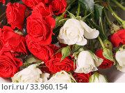 Купить «Bouquet of fresh red and white roses,», фото № 33960154, снято 14 февраля 2019 г. (c) Nataliia Zhekova / Фотобанк Лори