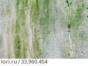 Купить «Old rusty mesh in blurring. Colorful pattern.», фото № 33960454, снято 8 мая 2017 г. (c) Nataliia Zhekova / Фотобанк Лори