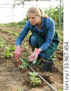 Купить «Female horticulturist with mattock working with pea and soy seedlings», фото № 33967454, снято 3 октября 2018 г. (c) Яков Филимонов / Фотобанк Лори