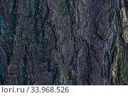 Old Wood Tree trunk Textured Pattern. Стоковое фото, фотограф Nataliia Zhekova / Фотобанк Лори