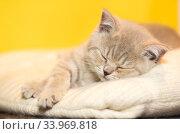 Купить «Маленький котенок спит на шерстяной подстилке», фото № 33969818, снято 30 мая 2020 г. (c) Наталья Гармашева / Фотобанк Лори