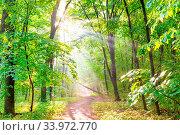 Купить «Green forest with autumn trees, footpath and sun light through leaves and fog», фото № 33972770, снято 6 июля 2020 г. (c) easy Fotostock / Фотобанк Лори