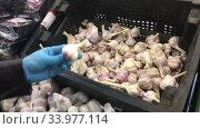Покупатель в резиновых перчатках выбирает чеснок в отделе свежих овощей и фруктов (2020 год). Редакционное видео, видеограф Кекяляйнен Андрей / Фотобанк Лори