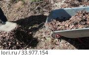 Загрузка сухой листвы в тележку при помощи совковой лопаты. Стоковое видео, видеограф Кекяляйнен Андрей / Фотобанк Лори