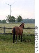 Купить «Goerlsdorf stud, horse stands doend at a fence», фото № 33984594, снято 2 июня 2019 г. (c) Caro Photoagency / Фотобанк Лори
