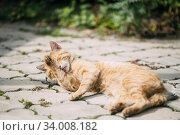 Купить «Peaceful Orange Red Tabby Cat Male Kitten Lick Washes Itself Outdoor.», фото № 34008182, снято 26 августа 2014 г. (c) easy Fotostock / Фотобанк Лори