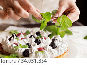 Beautiful freshly made berry meringue tart on plate. Stunning Blackberry meringue pie still life composition. Food photo. Process of making tart. Closeup hands of chef with mint. Стоковое фото, фотограф Nataliia Zhekova / Фотобанк Лори