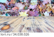 Wooden Table With Orange Leaves And Blurred Autumn Background. Стоковое фото, фотограф Zoonar.com/Tihomir Trifonov / easy Fotostock / Фотобанк Лори