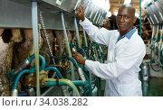 Farm milkmaid man in barn working with automatical cow milking machines. Стоковое фото, фотограф Яков Филимонов / Фотобанк Лори