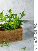 Green mint in crate on grey backfround. Fresh mint close up in wooden box. Aromatic herbs enrich the vegetarian cuisine. Стоковое фото, фотограф Nataliia Zhekova / Фотобанк Лори