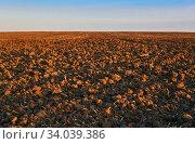 Купить «Plowed field close up, horizon blurred», фото № 34039386, снято 4 июня 2020 г. (c) Евгений Харитонов / Фотобанк Лори