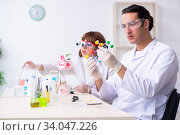 Two chemists working in the lab. Стоковое фото, фотограф Elnur / Фотобанк Лори