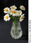 Bouquet of daisy flowers in a glass vase on a dark background. Стоковое фото, фотограф Яна Королёва / Фотобанк Лори