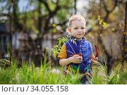 Купить «little boy planting and gardening tomato seedlings», фото № 34055158, снято 1 мая 2015 г. (c) Nataliia Zhekova / Фотобанк Лори