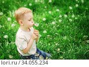 Adorable little boy blowing on a dandelion on a green spring meadow. Стоковое фото, фотограф Nataliia Zhekova / Фотобанк Лори