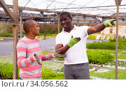 Купить «African and Latino men garden workers berating», фото № 34056562, снято 4 августа 2020 г. (c) Яков Филимонов / Фотобанк Лори